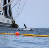 FECOP COSTA RICA FISHING FEDERATION