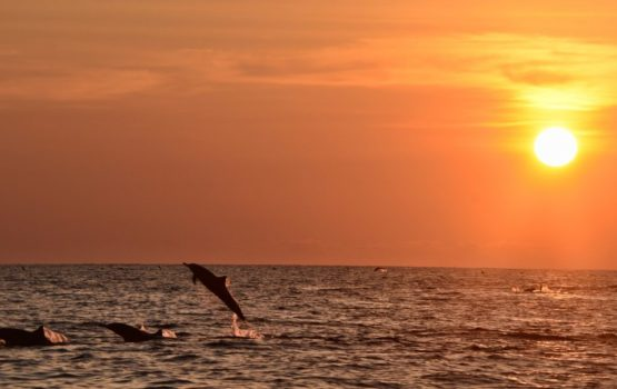 Why I sometimes hate conservation – or, the 'dolphin breeding ground' debacle