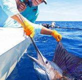 Costa Rica fishing sailfish