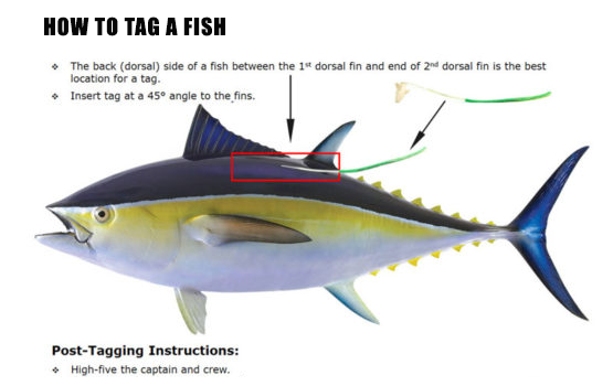 How to TAG a Fish