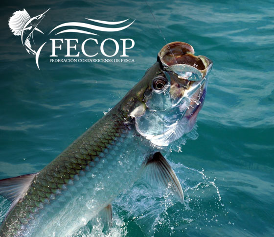 Tarpon Fishing Videos