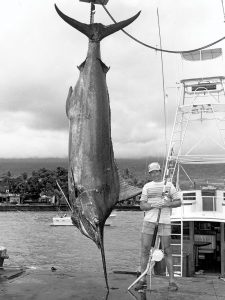 World Record Blue Marlin