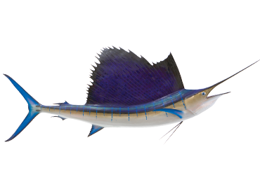 Costa Rica Sailfish