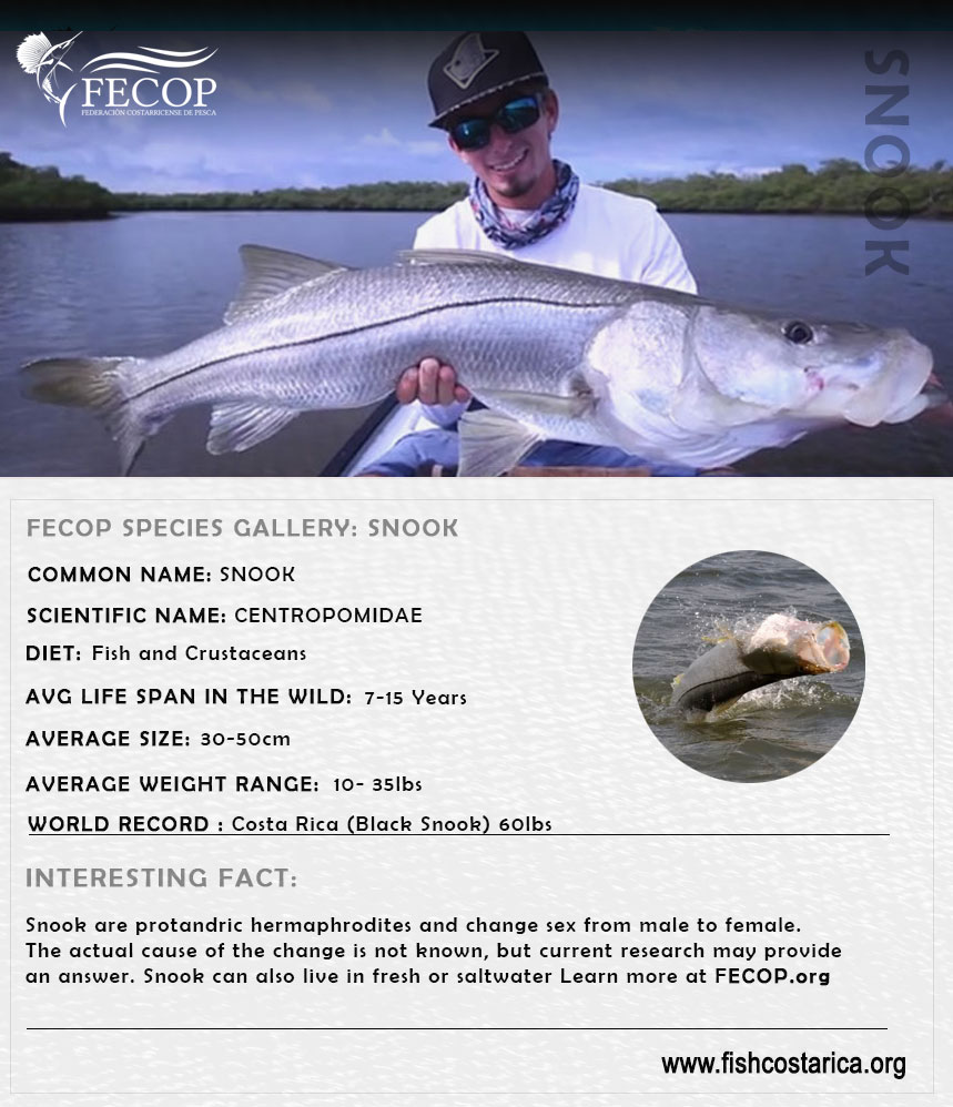Costa Rica Snook Facts