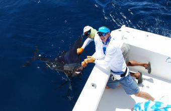 Costa RIca Sailfish worth more alive than dead