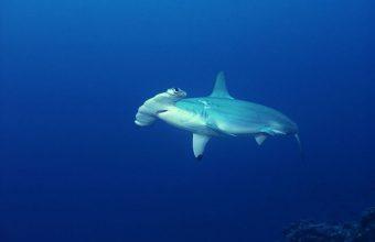 costa rica conservation sharks