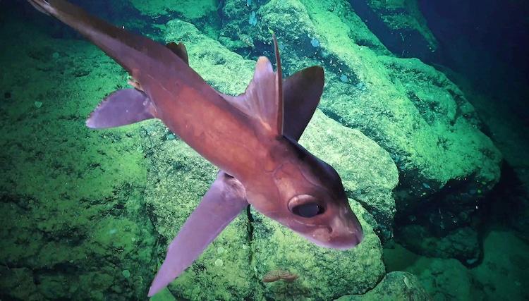 Costa Rica Deep Sea Fish Species
