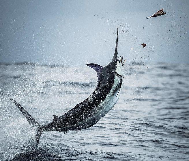 Calendario de torneos de pesca en Costa Rica