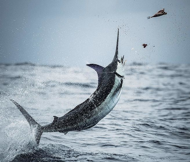 Costa Rica Fishing Tournament Calendar