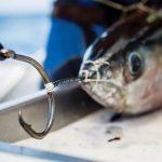 Costa Rica Circle Hook Fishing