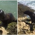 Costa Rica Sea Lion
