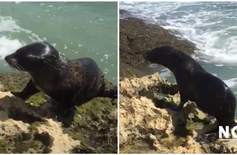 Costa Rica Sea Lion