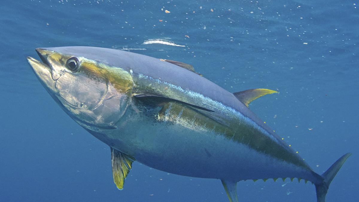 Costa Rica pesca de atún