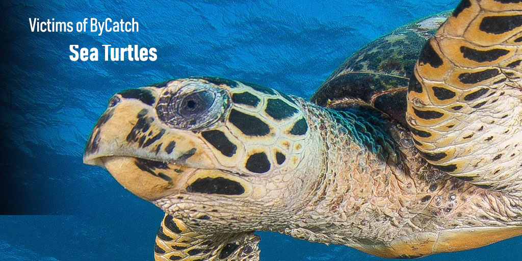 Detener la pesca ilegal en Costa Rica